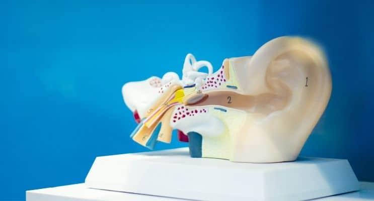 Plastic ear model