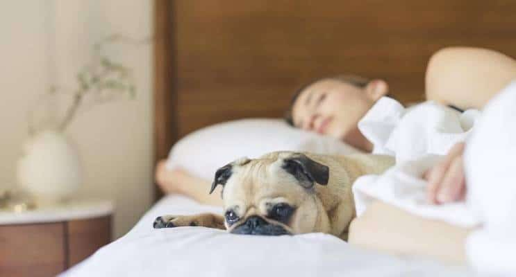 Sleep with puppy